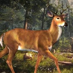 Deer Hunting Challenge 2016