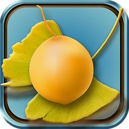 銀杏的果實:日本文學名著《中文版》