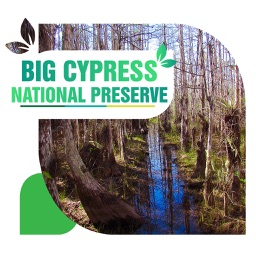 Big Cypress National Preserve Travel Guide