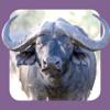 Sasol Natuurlewe vir Beginners (Lite): Blitsfeite, foto's en video's van 46 Suider-Afrikaanse diere