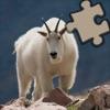 Animals Puzzle Centre