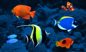 Reef Aquarium - Living Art