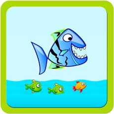Activities of Ocean Fish Run