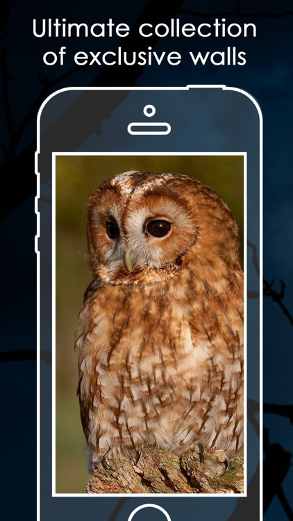 Best Owl Backgrounds   Owl HD Pic.ture & Wallpaper