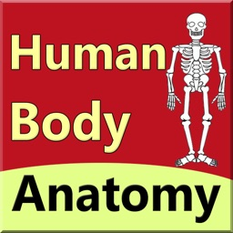 body anatomy guide