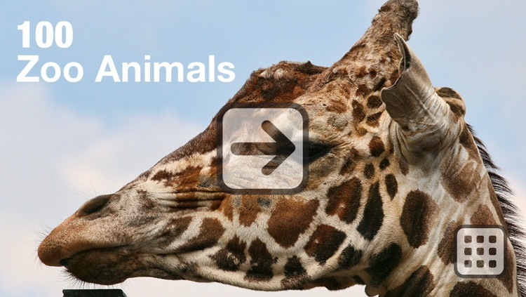 100 Things: Zoo Animals - Video & Picture Book for Toddlers screenshot-3