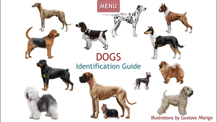 Dogs - Identification Guide