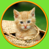 tgames-kids - games for cats - no ads artwork