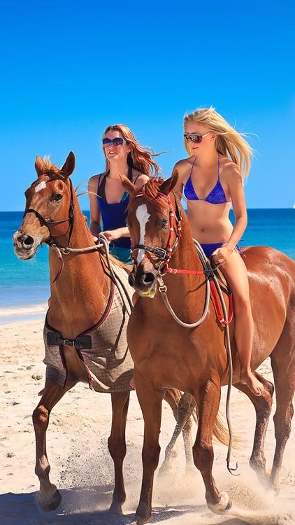 Dream Horses - Art Gallery: Breeds & Types, Racetrack & Tournaments, Photos & Paintings screenshot-4