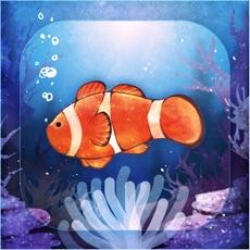 Activities of Clownfish Aquarium