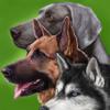 Perros - Guía de Identificación