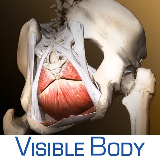 Visible Body®/AMS™ Pelvic Anatomy App