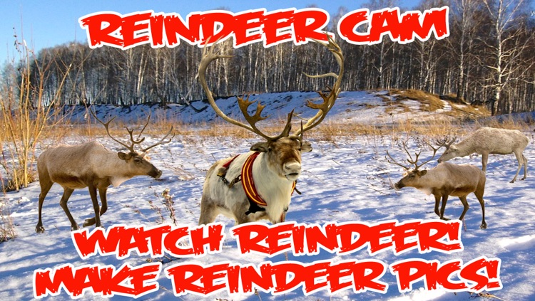 ReindeerCam - Watch Santa's Reindeer & More! screenshot-4