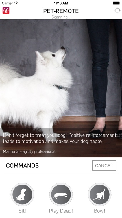 Pet-Remote - Control your dog or pet