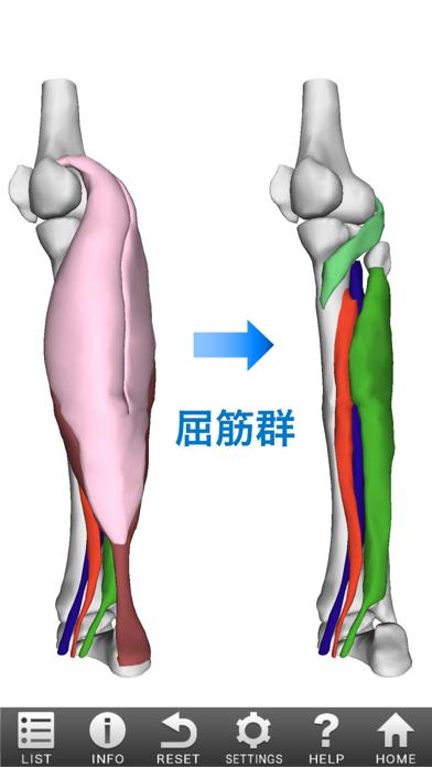3D筋肉図鑑 ScreenShot1