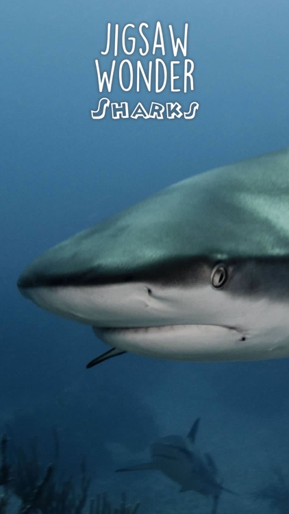 Shark Puzzles for Kids Jigsaw Wonder Collection screenshot-4