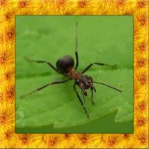 Black Ant Simulator 3D