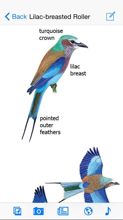 Sasol eBirds of the Kruger National Park