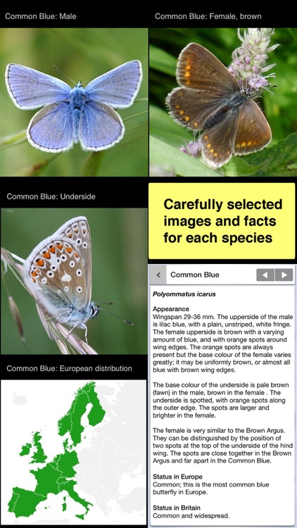 Butterfly ID Britain: A Guide to British Butterflies and Day-flying Moths from iSpiny