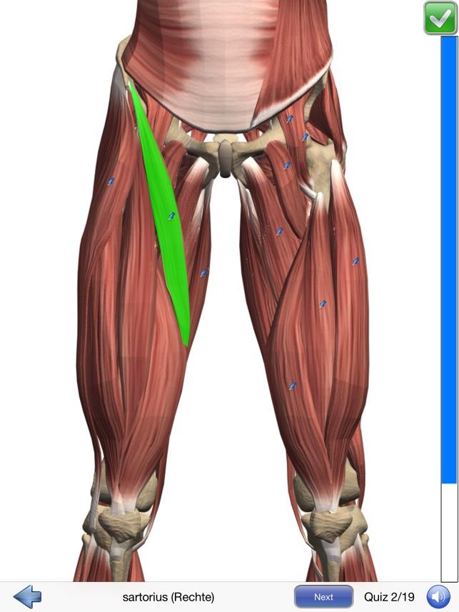 Niedlich Anatomie Und Physiologie Kapitel 6 Quiz Fotos - Menschliche ...