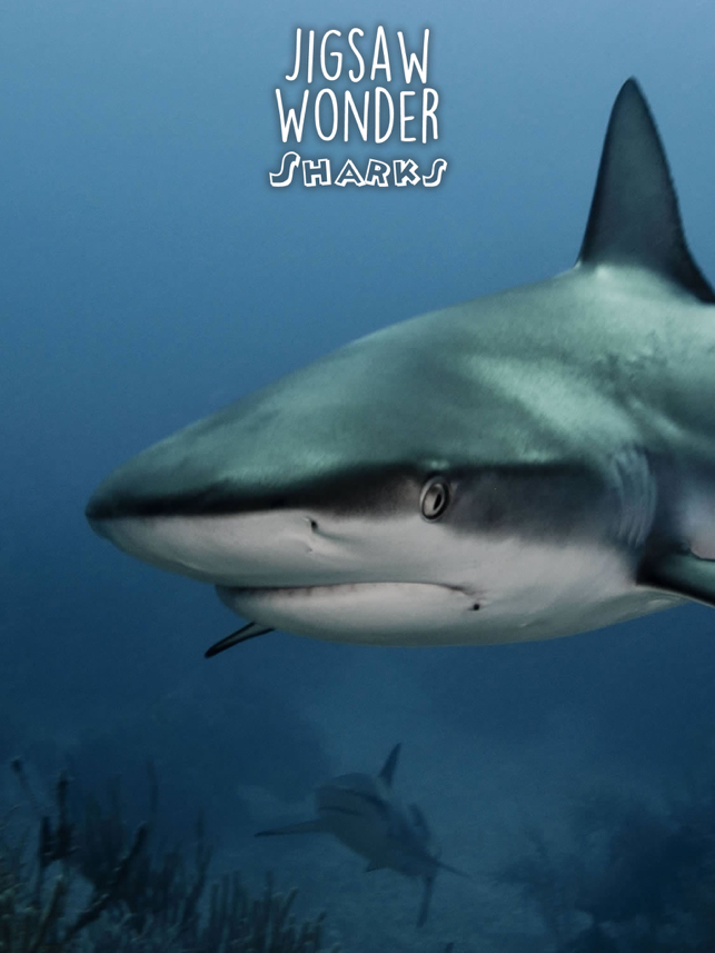 ‎Shark Puzzles for Kids Jigsaw Wonder Collection Screenshot