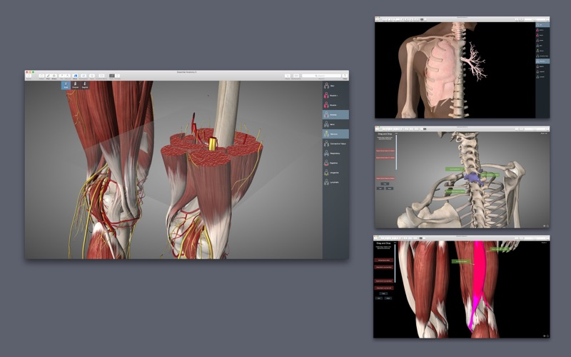 Essential Anatomy 2 Screenshot