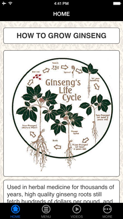 How To Grow Ginseng - Beginner's Guide
