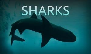 Sharks Live