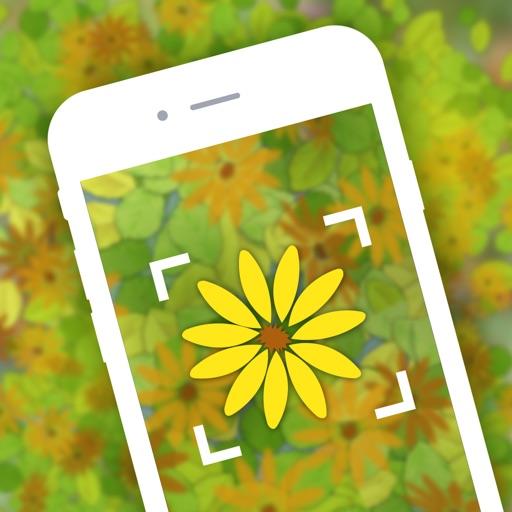 Garden Распознавать цветы