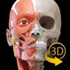 筋肉系 - 解剖学3Dアトラス - 人体の骨格と筋肉 - 3D Atlas of Anatomy iPhone / iPad