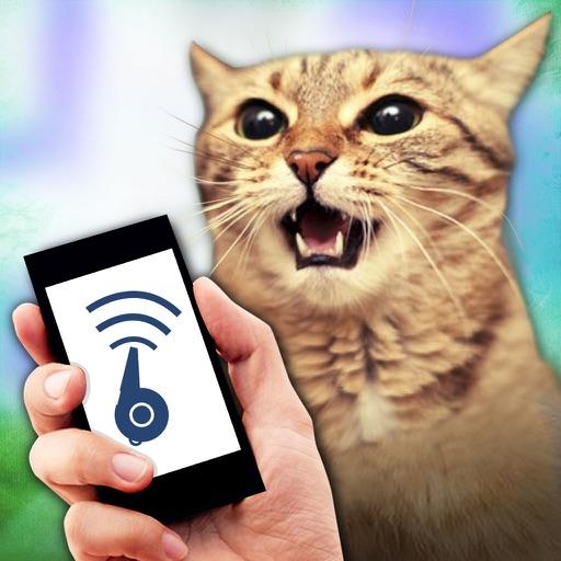 Кот Свисток Задира Шутки