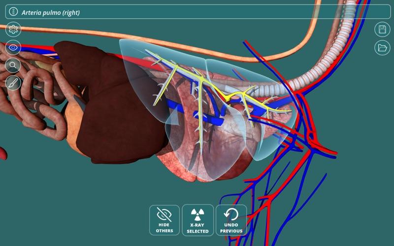 Visual Anatomy - Canine | App Price Drops