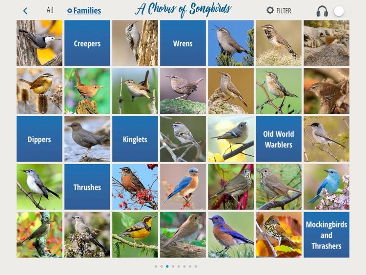 A Chorus of Songbirds
