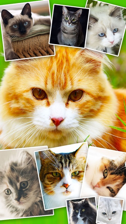 Cats & Kittens Wallpapers - Cute Animal Backgrounds and Cat Images