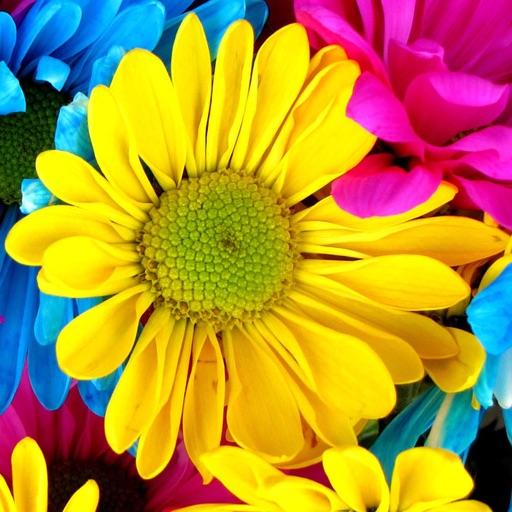 Lock Screen Flower Wallpaper Hd - Flowers Healthy