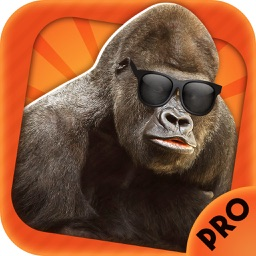 Photo knockout prank - legend of tarzan style lens+selfie sticker maker