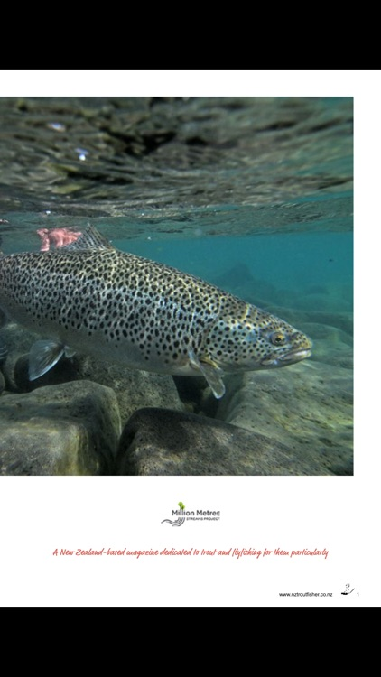 NZ Trout Fisher