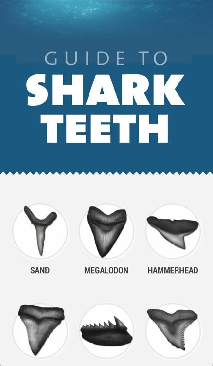 Shark Teeth