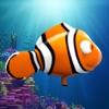 Splashy Oscar – the little clownfish