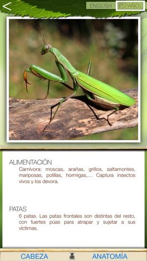 Insectos comunes en App Store