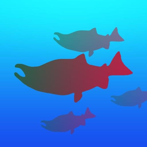 Alaska Fish Count
