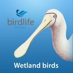 Wetland Birds Field Guide