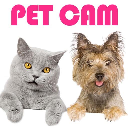 Pet Cam!