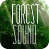 Forest Sound for Sleep and Meditation
