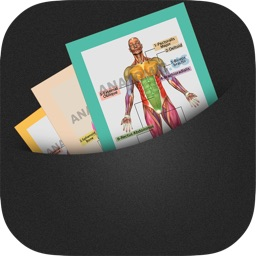 Anatomy Cards