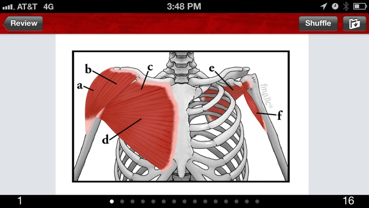 Anatomy & Kinesiology Flashcards screenshot-3