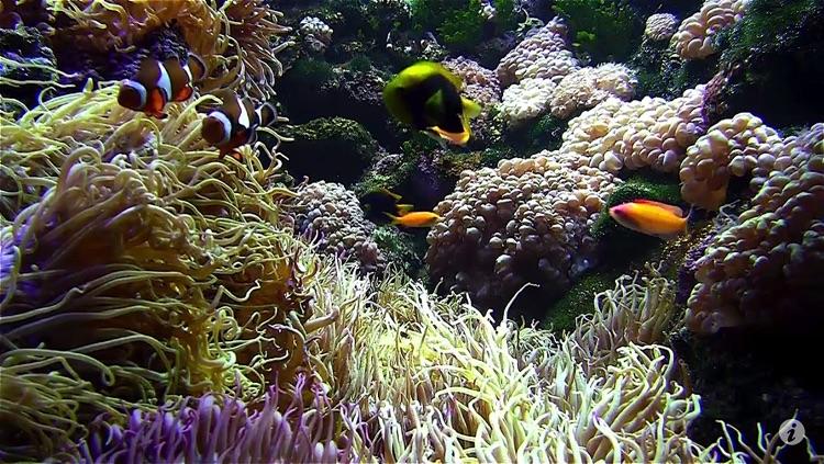 Aquarium live free screenshot-4