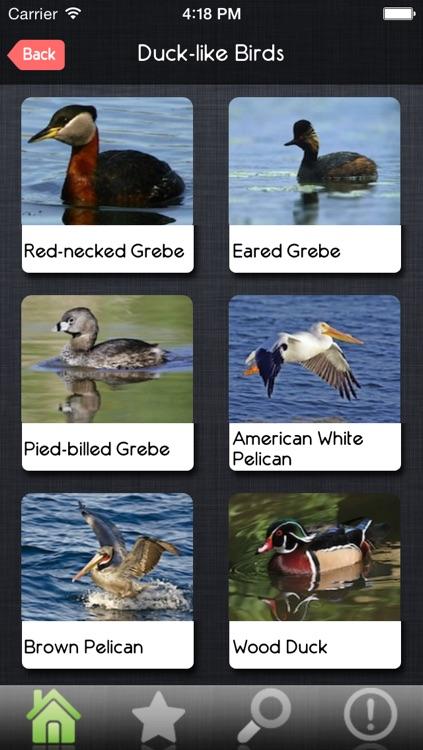 Birds Guide