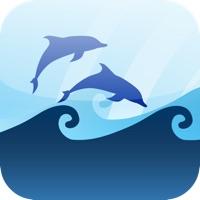 Codes for Marine Quiz : Ocean Water Mammals Species Animal Guess Game Hack
