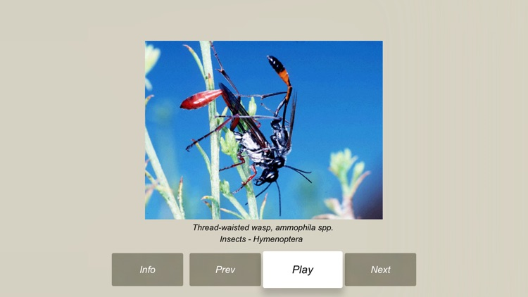 Animals and Insects Encyclopedia